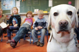 Hond in de klas Sophia SnuffelCollege