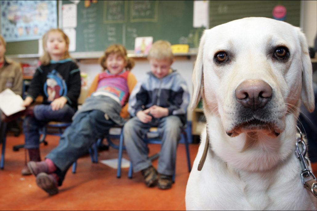 Hond in de klas Sophia SnuffelCollege snuffelnieuws