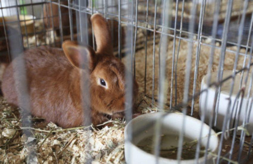eenzaamheid konijn huisvesting