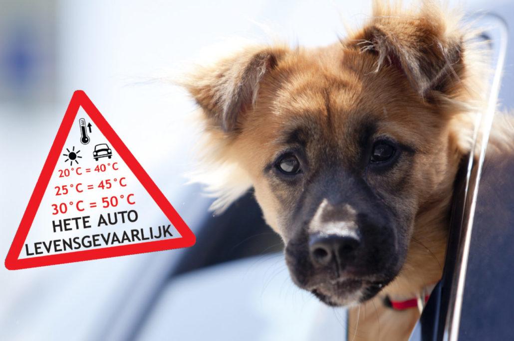 hond hete auto Sophia HitteStikker