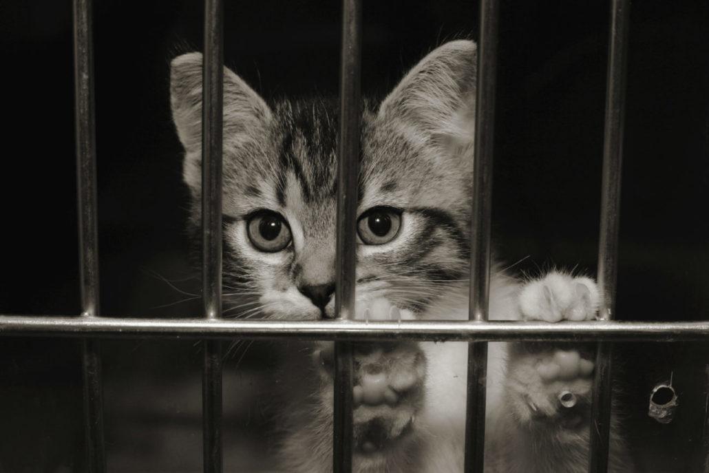 kitten marktplaats stop handel