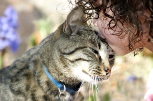 kattten verzorging