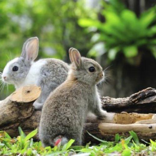 informatie over konijnen