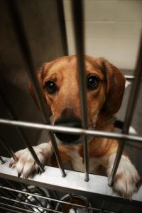 hond schenk belastingvrij