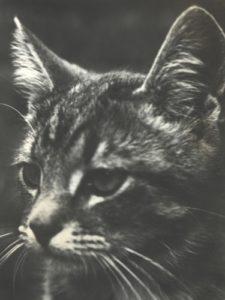 TNR 1992