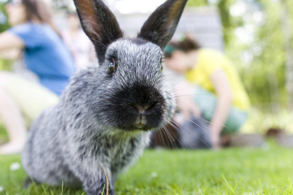konijnenspreekuur