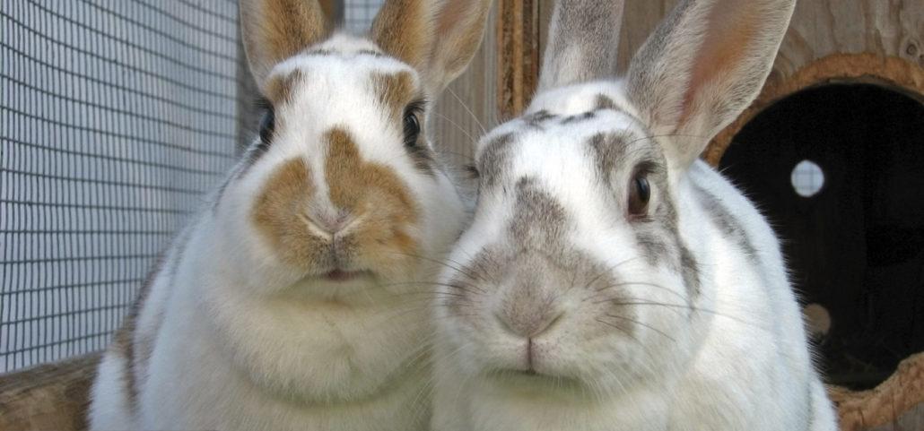 schenk belastingvrij konijnen