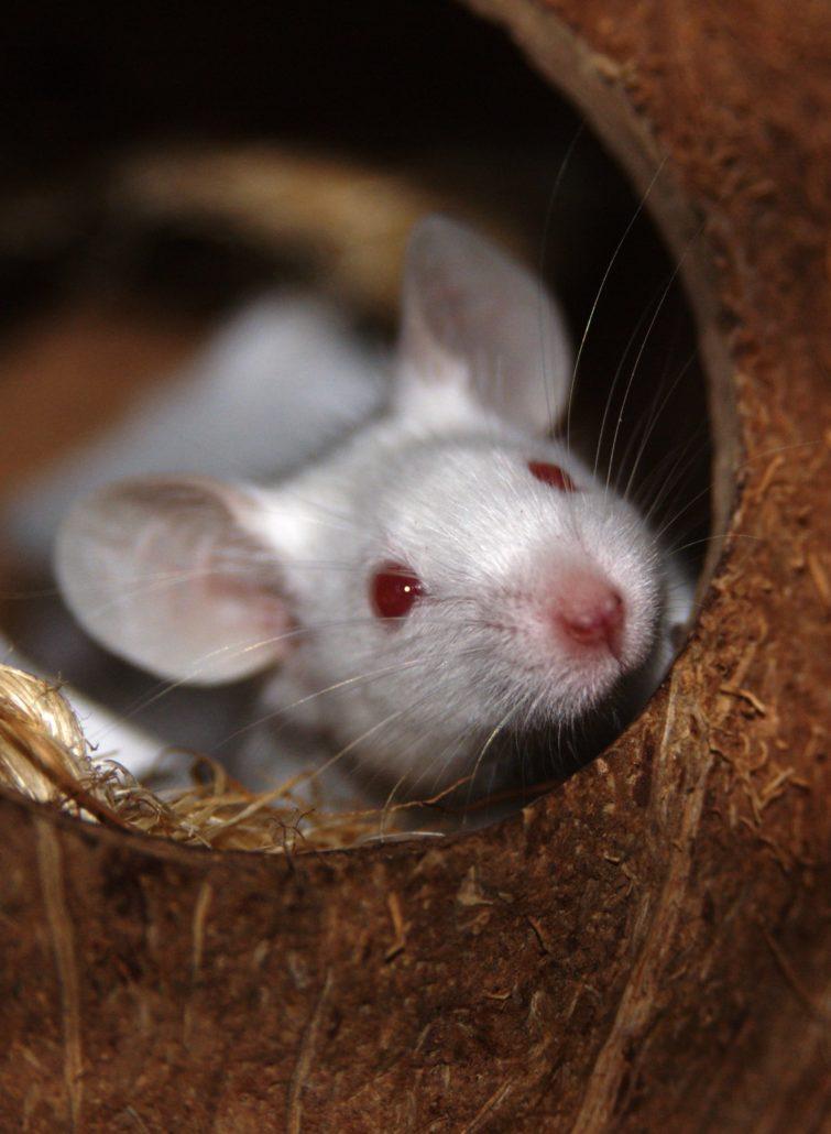 muis kopen