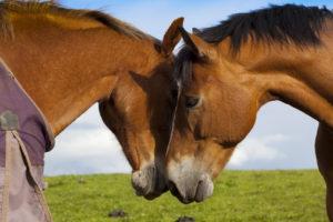paarden sociaal