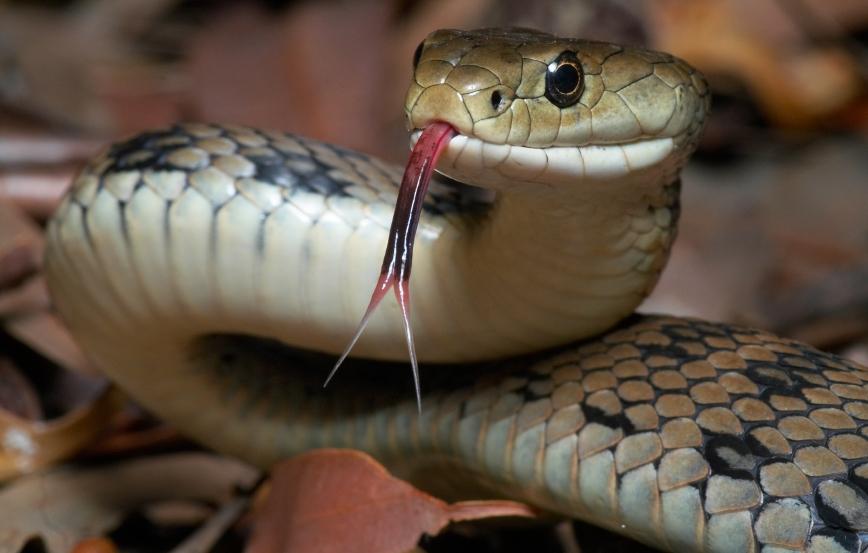 slang niet geschikt als huisdier