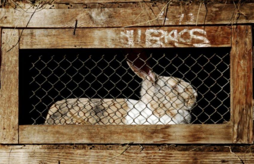 konijn verzorging