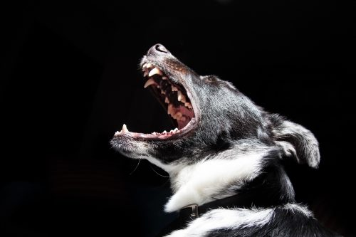 gebitsverzorging hond