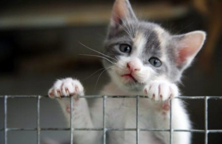 kat dierenleed
