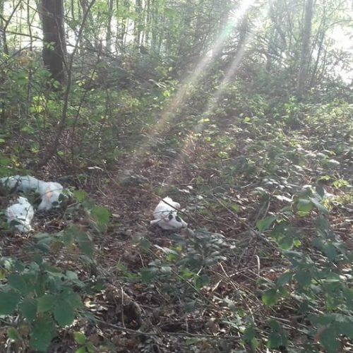 gedumpte dode konijnen