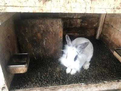 impulsaankopen konijn verwaarloosd