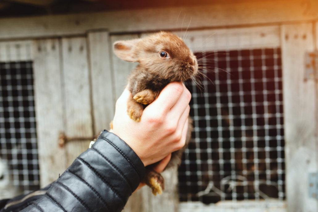 konijn doden van dieren