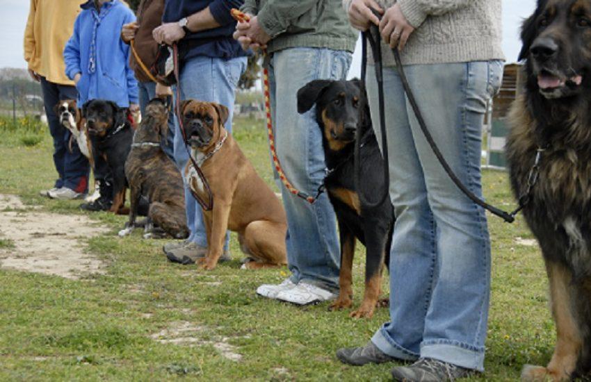 honden halsband