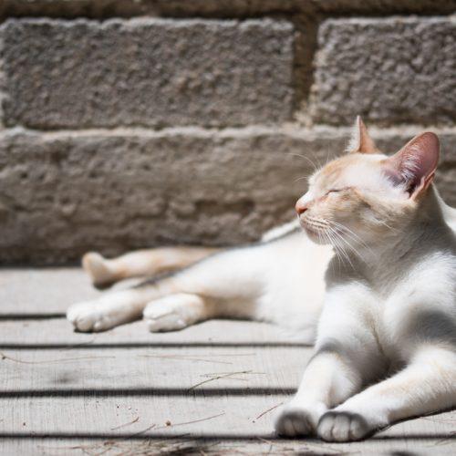 zomertips voor huisdieren