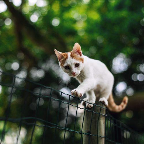 castratieplicht katten