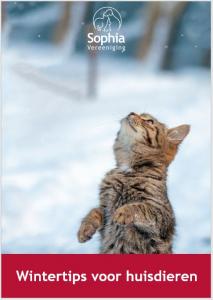 Wintertips voor huisdieren