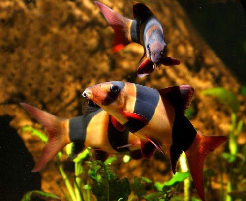vissen verzorging