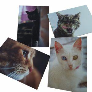 Kattenkaarten giftshop