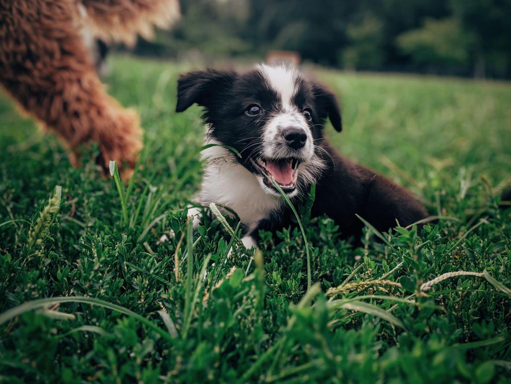 puppytraining hondenschool