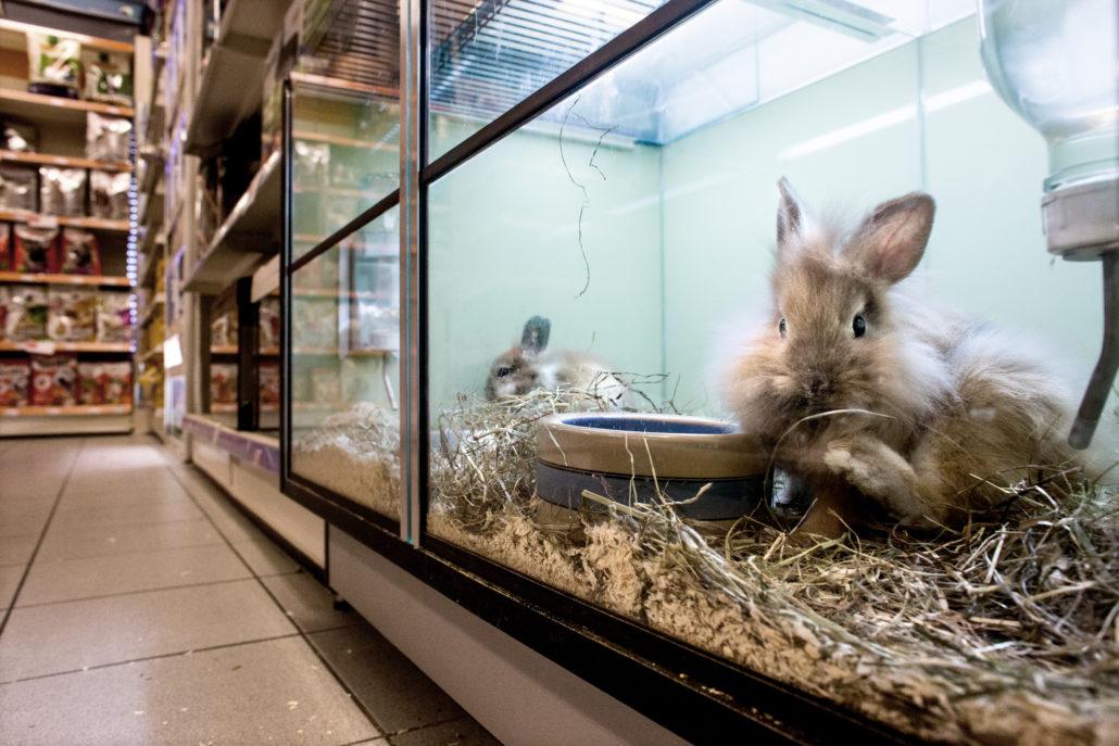 dierenhandel stop de verkoop in winkels