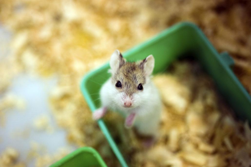 hamster covid-19 hamsterspreekuur