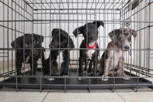 Stop de huisdierenhandel