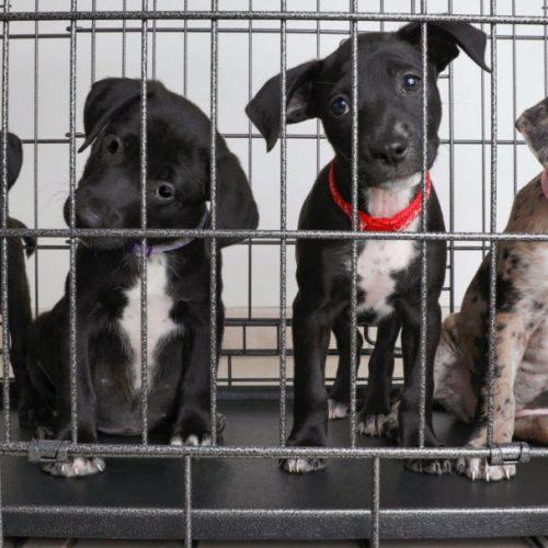 Stop de huisdierenhandel inzamelingsactie