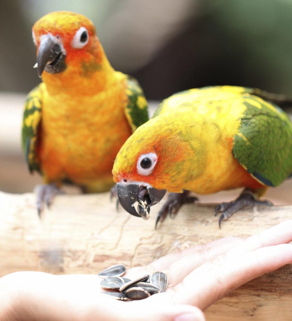 vogels eten sociaal