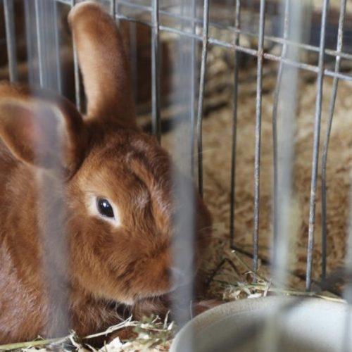 konijn eenzaamheid