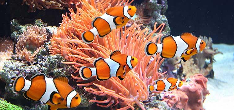 wat eten vissen