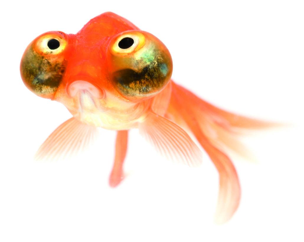 vis extreem uiterlijk