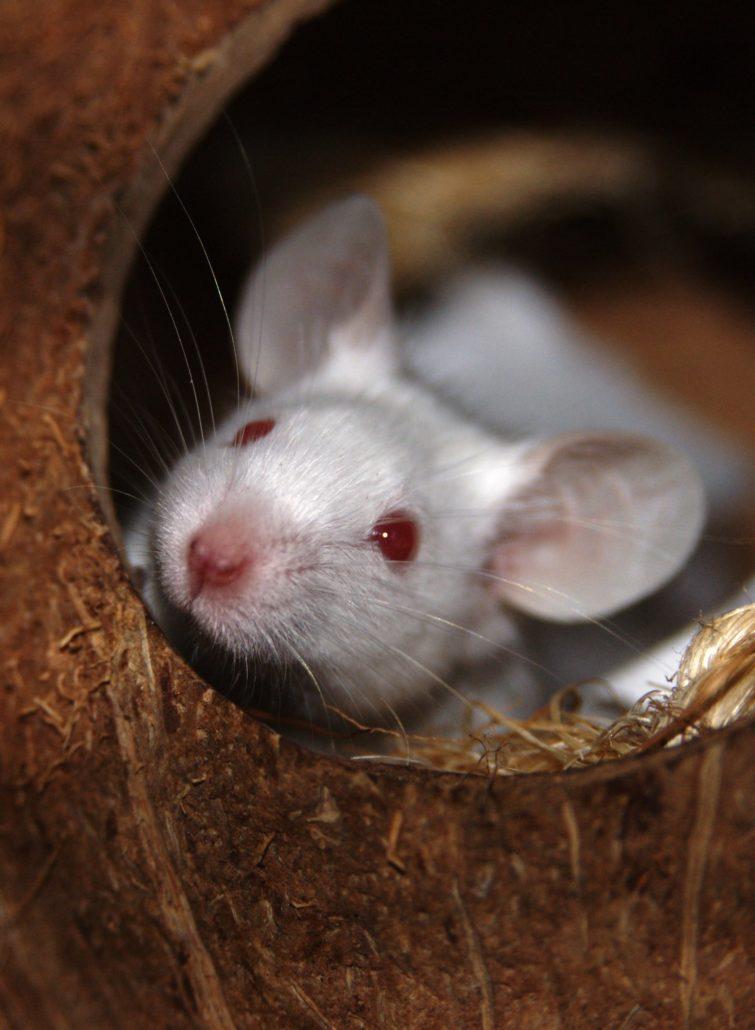 muizengedrag