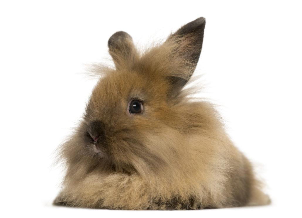 langharig konijn verzorgen