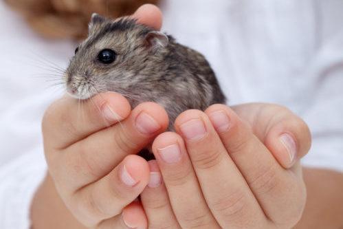hamster kopen