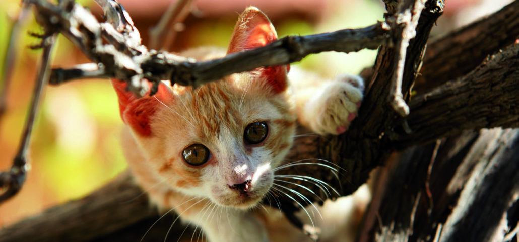 kat katten