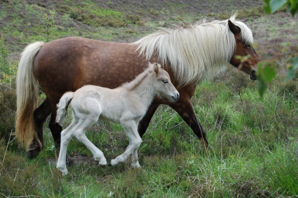 paard verzorging