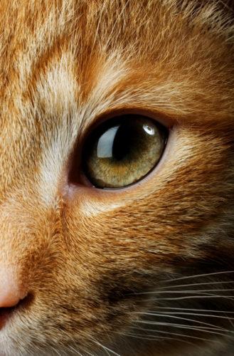 kat oog