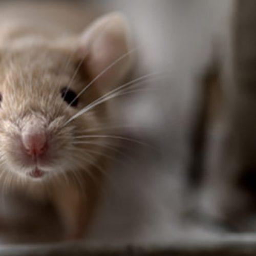 muis huisvesting