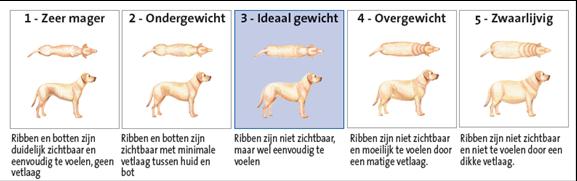 Gewicht hond bron Dierenkliniek de Haardstede