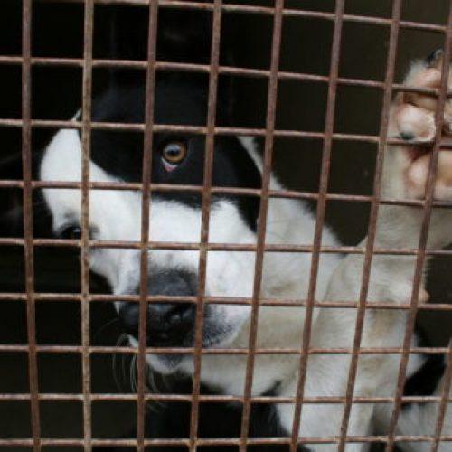 fokteven malafide hondenhandel