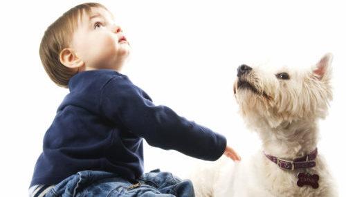 peuter en hond