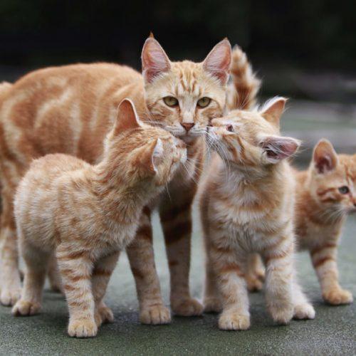 Huisdierenoverschot