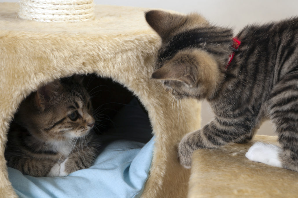 katten verzorging