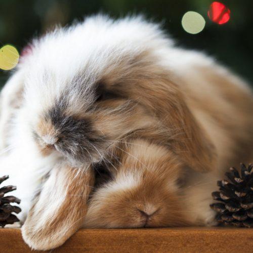 Kerst konijnen